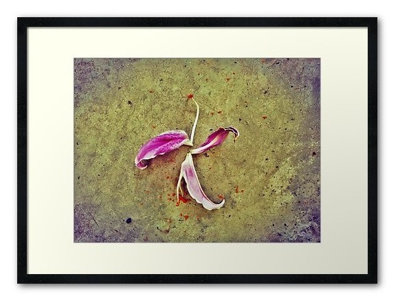 Fallen flower as a franed print